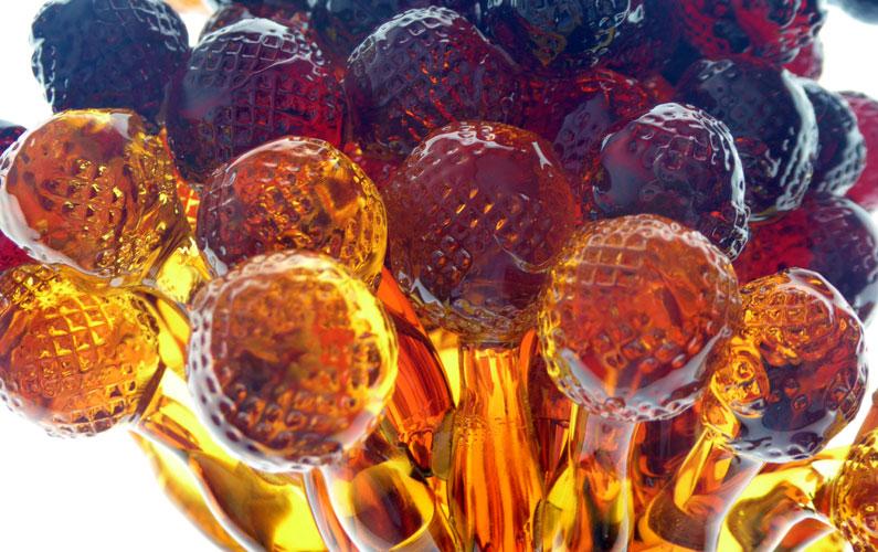 Aspergillus Brasiliensis glass