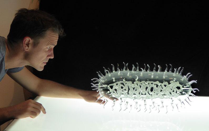 Lactobacillus_sculpture